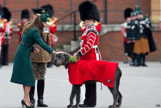 Kate and Irish Guard Dog