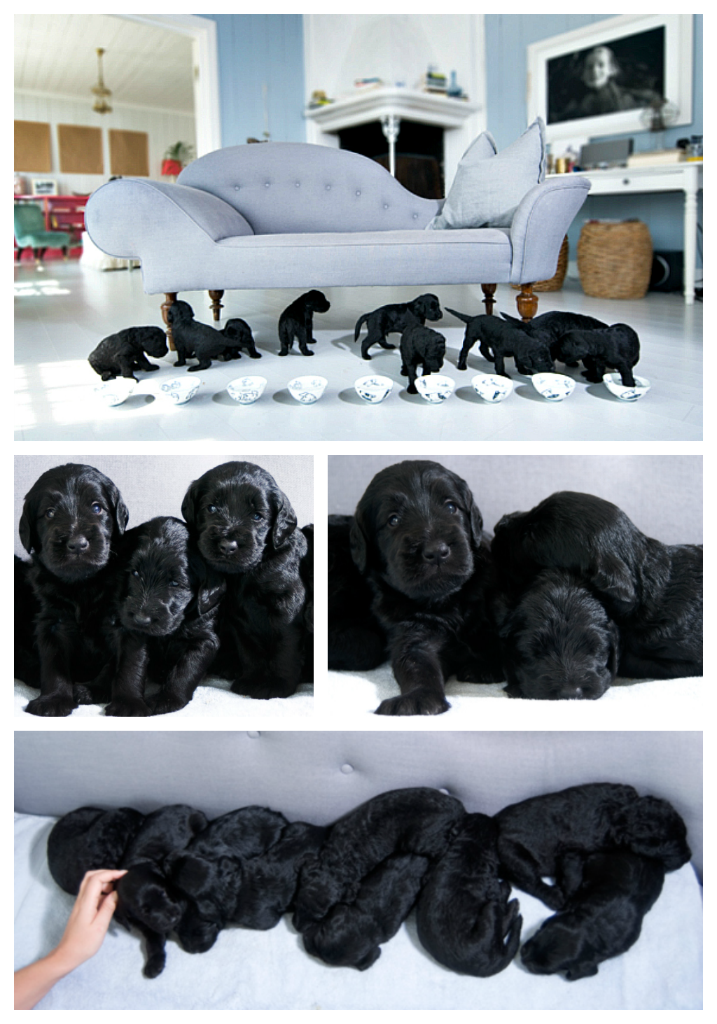 Milly-Kakao-with-her-9-puppies-2