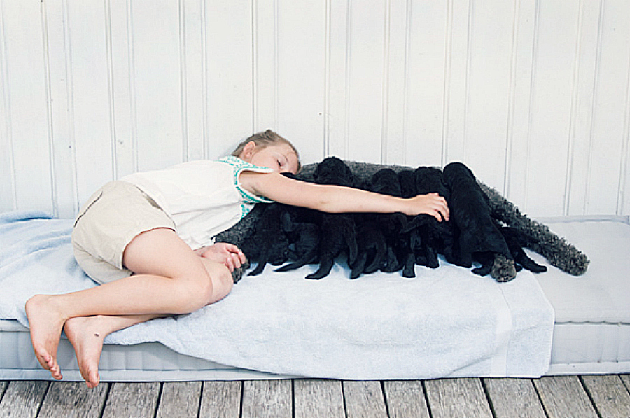 Princess-Ingrid-Alexandra-with-Milly-Kakao-and-puppies